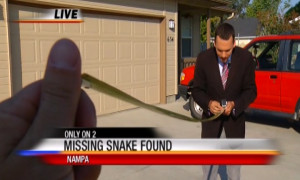KBOI 2News helps find snake that escaped cage